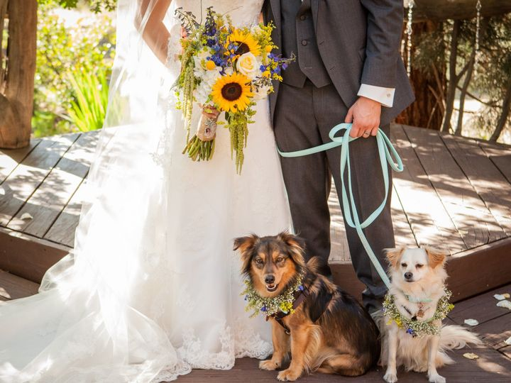 Tmx Shutterstock 297643880 Couple With 2 Dogs 51 456323 1573494938 Frederick, MD wedding officiant