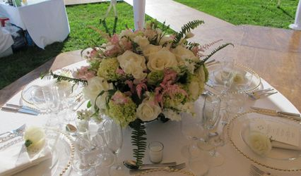 AMARYLLIS EVENT DECOR