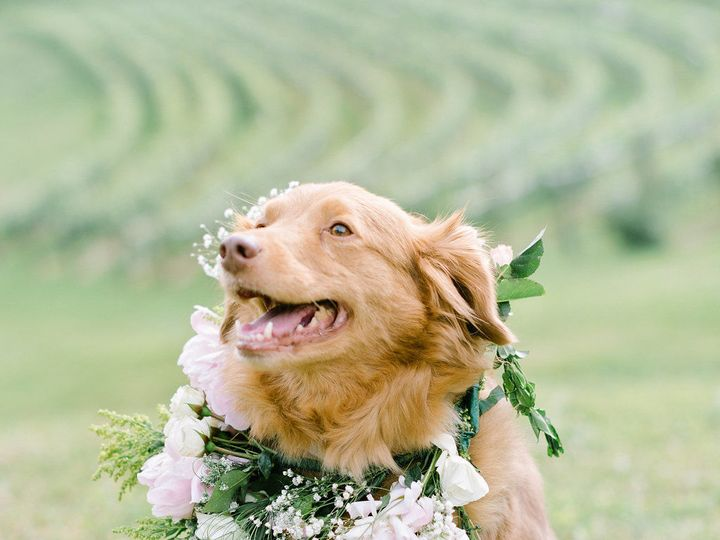 Tmx 1535658864 1f769ee0e6530cb4 1535658862 0249404557ee25d0 1535658856863 6 0332 Dahlonega, Georgia wedding venue