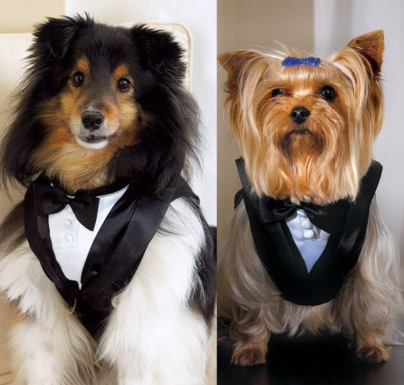 PET TUX Your Best Pet will look smashing in a Tux of his own! Complete with black bow and three tiny...