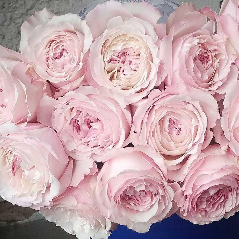Import Flowers