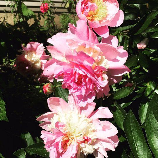 Earlystown Manor Bed & Breakfast's flower