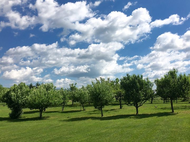 Private Orchard