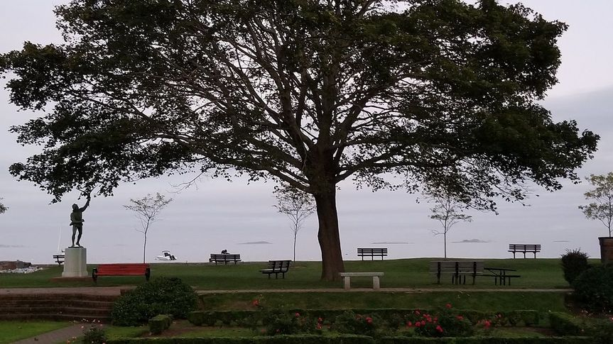 View of the tree