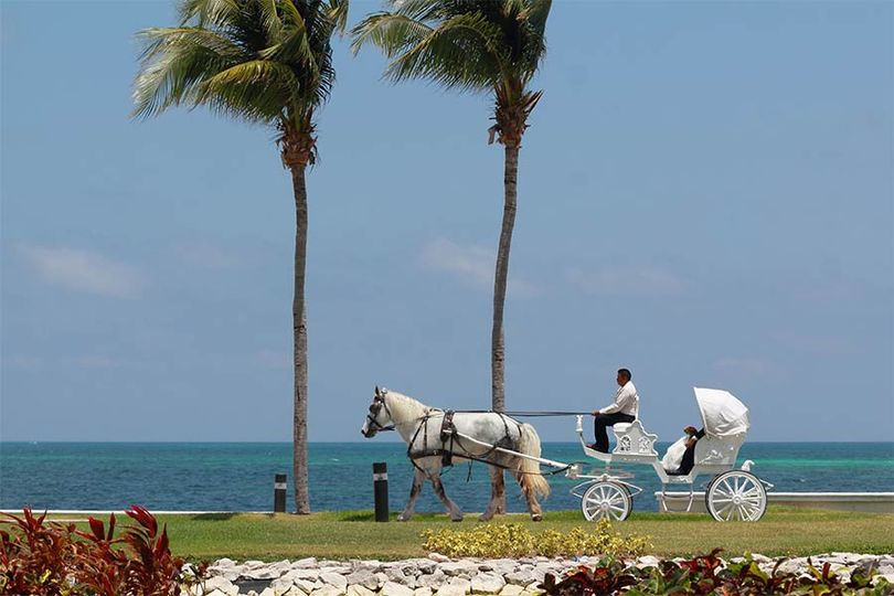 Horse and buggy on beach