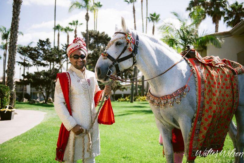 Baraat horse - Walters Wilson Studios