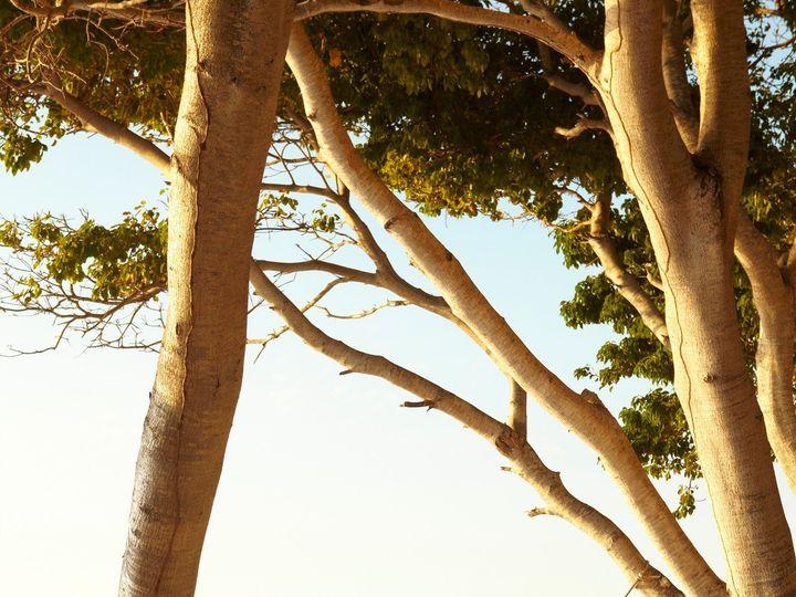 Tmx 1416271251923 Four Seasons Punta Mita Aurora wedding travel