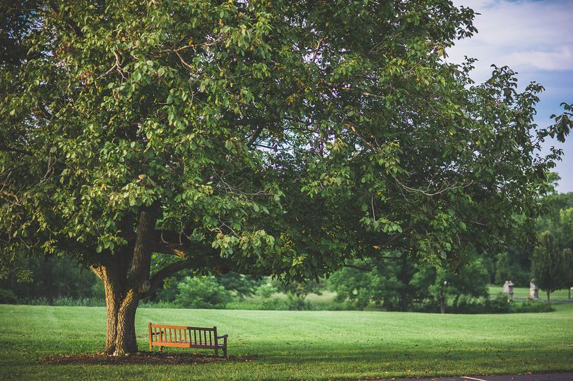 centenial barn tree