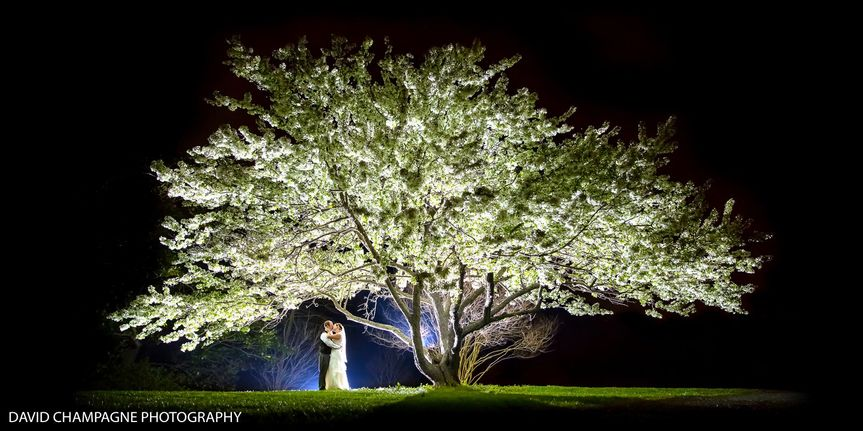 Beneath the tree - David Champagne Photography