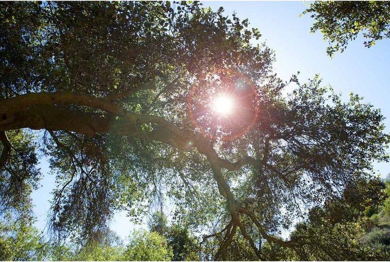 oak26