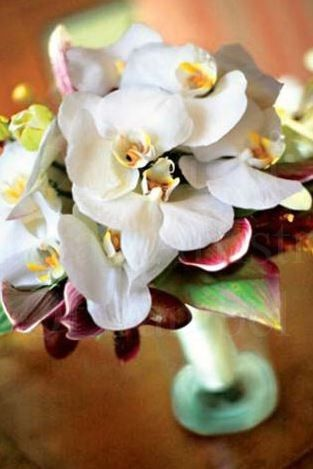 Tmx 1398355058180 Captur Sanibel, Florida wedding florist