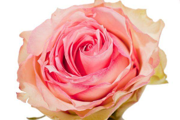DIY flowers, wedding roses, roses, esperance roses, wholesale flowers