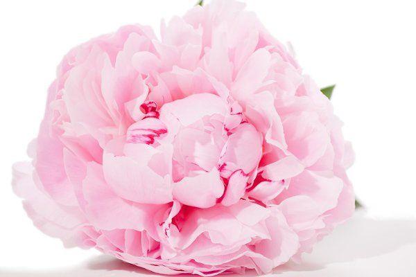 DIY flowers, wholesale flowers, peonies, pink peony