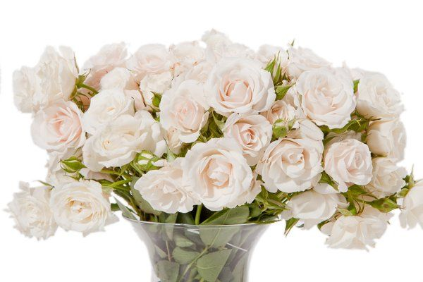 DIY flowers, wholesale flowers, white spray roses, easy bouquet