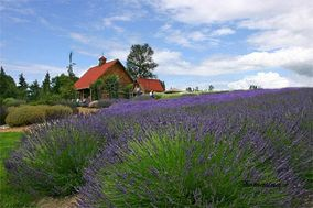 Purple Haze Lavender Farm