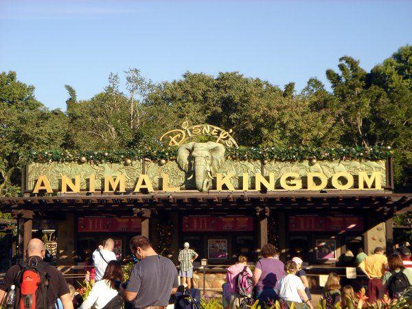 The Animal Kingdom at Walt Disney World