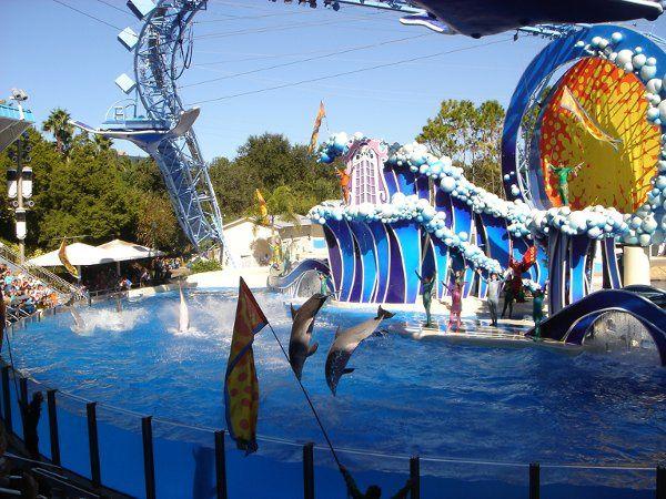 Sea World in Orlando!