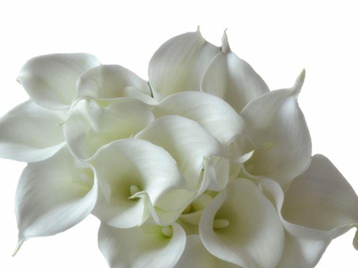 Tmx 18pcsnew 51 1031243 Frisco, Texas wedding florist