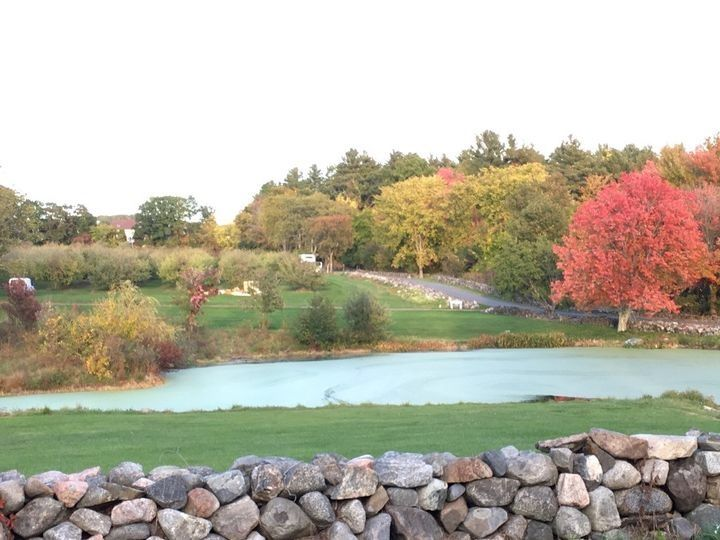 Pond and orchard