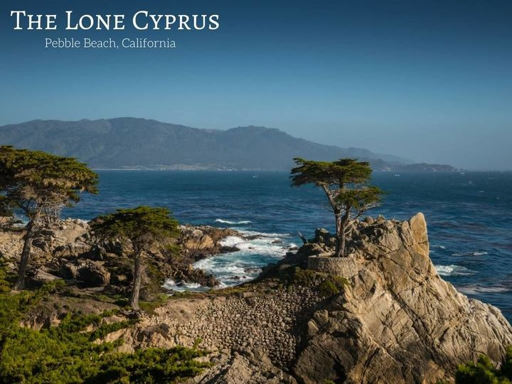 Lone cyprus