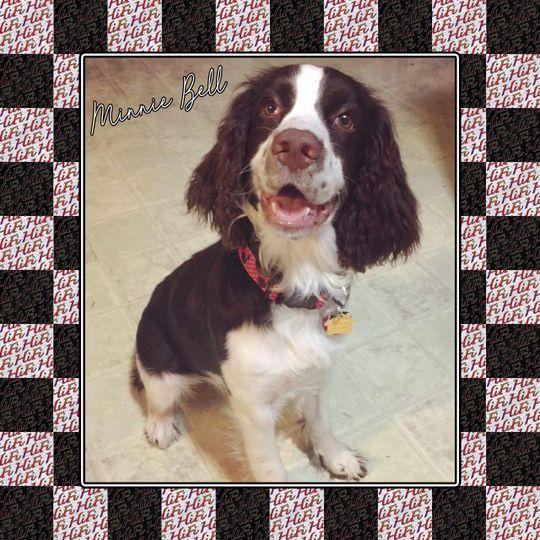 Our puppy, Minnie