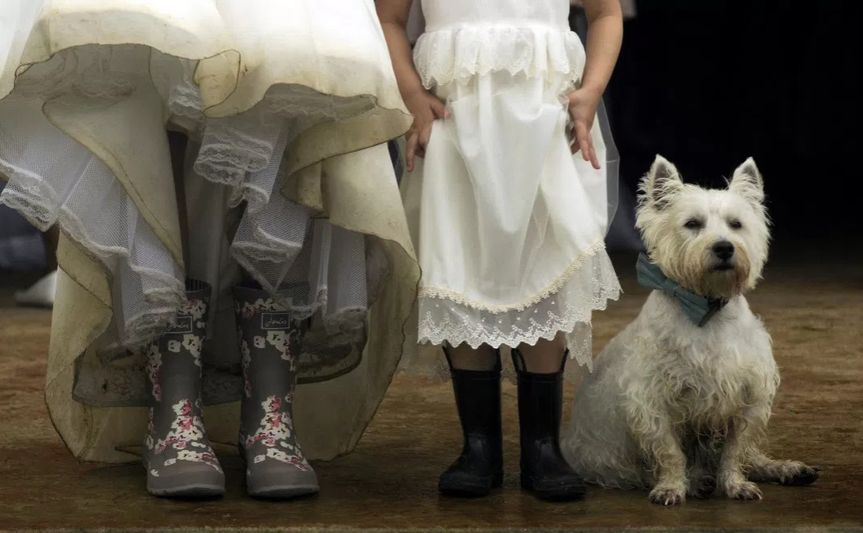 Dresses and the dog