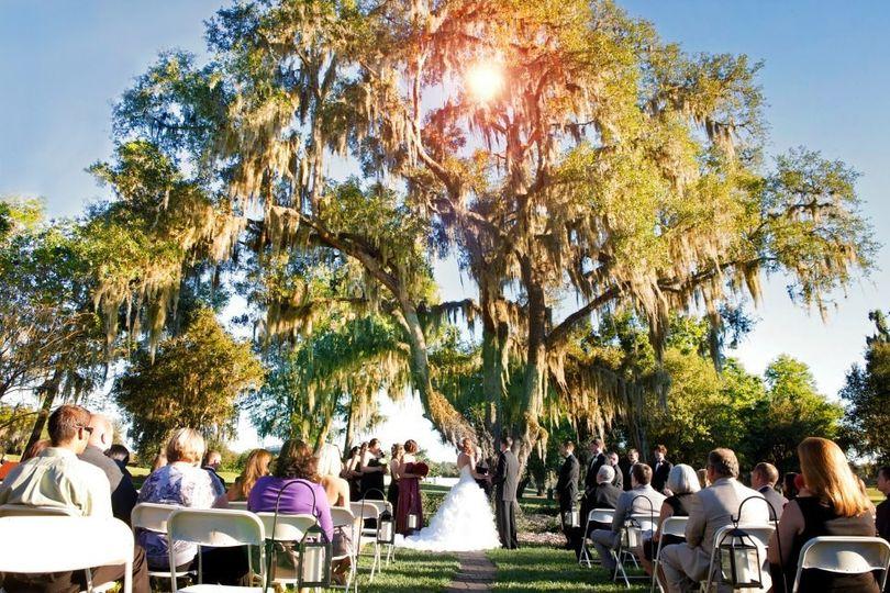 Wedding ceremony by the big tree