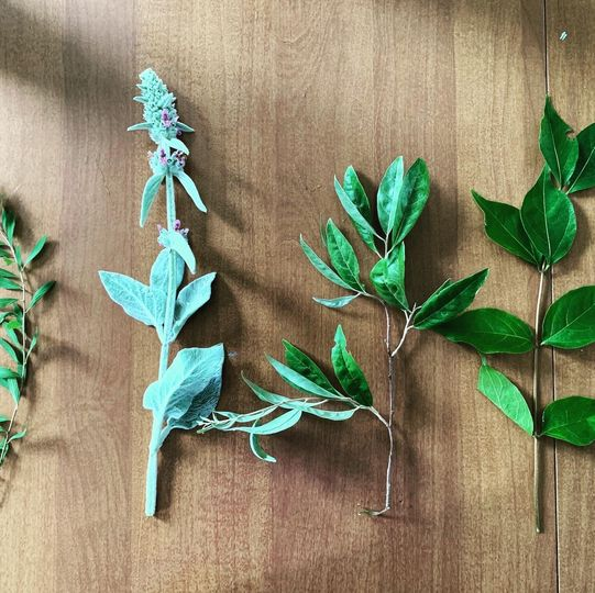 Cuttings from the Byron garden