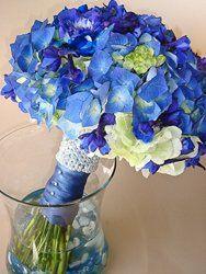 lauren blue hydrangea
