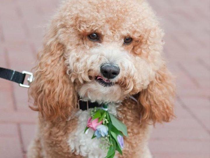 Tmx 1508268928522 9 Columbus wedding florist