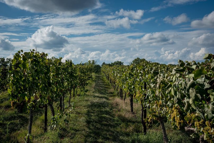 Russian Chapel Hills Winery - Venue - Columbus, NC - WeddingWire