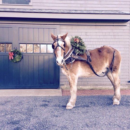 Horse with a floral arrangement