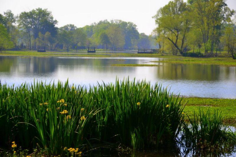 Oakville Pond