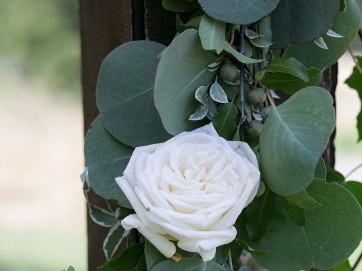 Tmx 1mariahsmithphotography342 51 1895453 157429143912245 Petaluma, CA wedding florist
