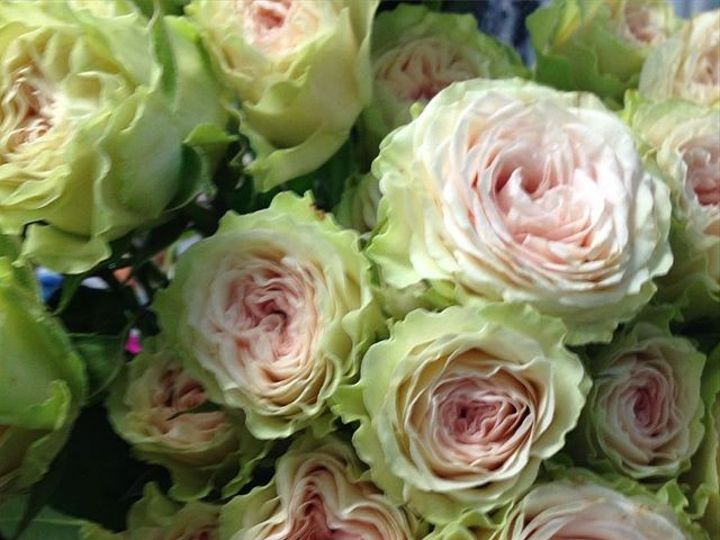 Tmx 1466804063636 1326941916336248369602231144540036n Bayville, NJ wedding florist