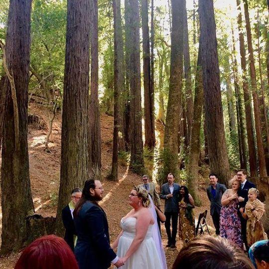 Wedding in redwood trees
