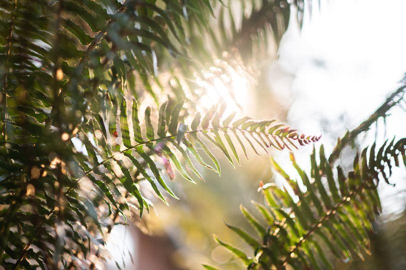 Sunlight through the ferns