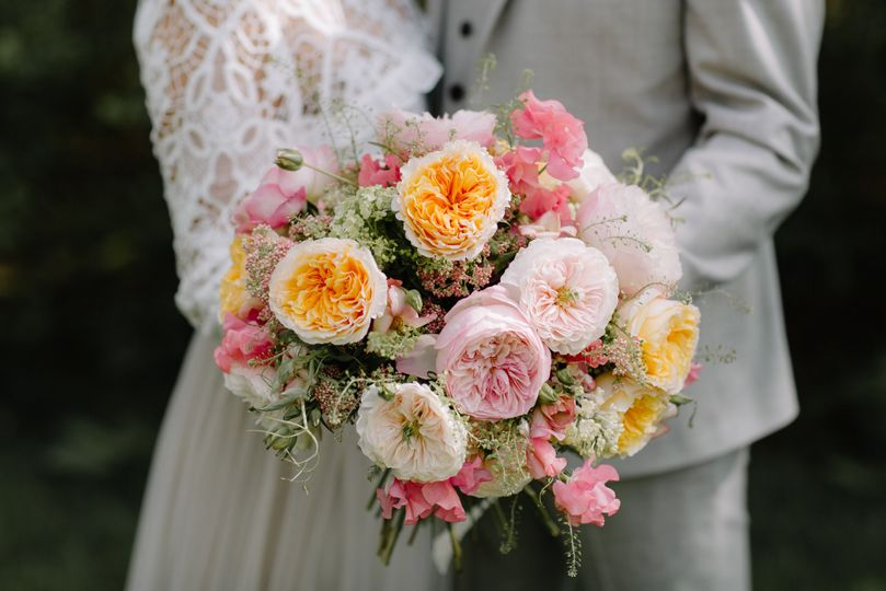 david austin roses 135 51 1981953 159631496860429