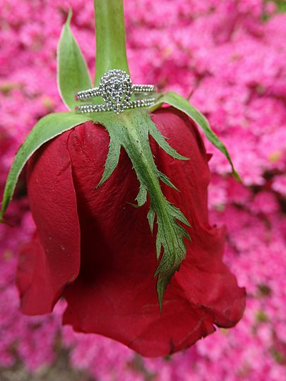 Engagement rose and ring