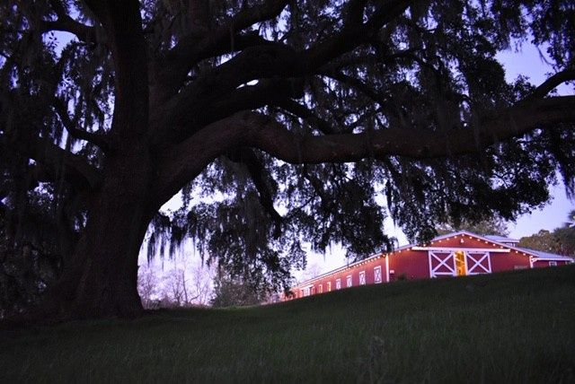 The Barn and Oak Tree