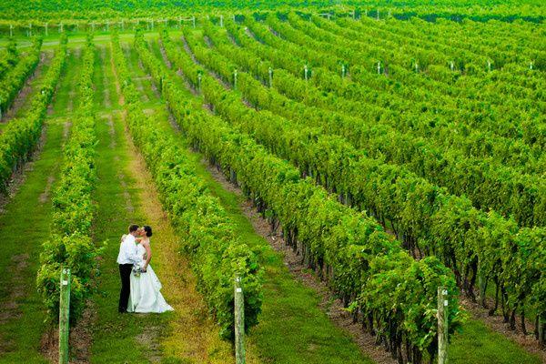 Tmx 1371620356890 Laurita Winery Wedding New York City New York, NY wedding catering