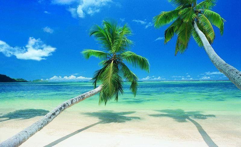 beach2palms29650652std