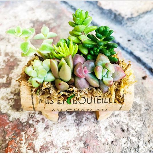Use succulent cork micro gardens as place card holders and party favors
