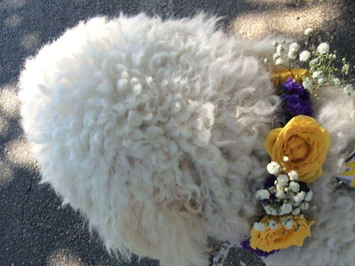 Tmx 1416246439188 Img4559 Plymouth, Massachusetts wedding florist