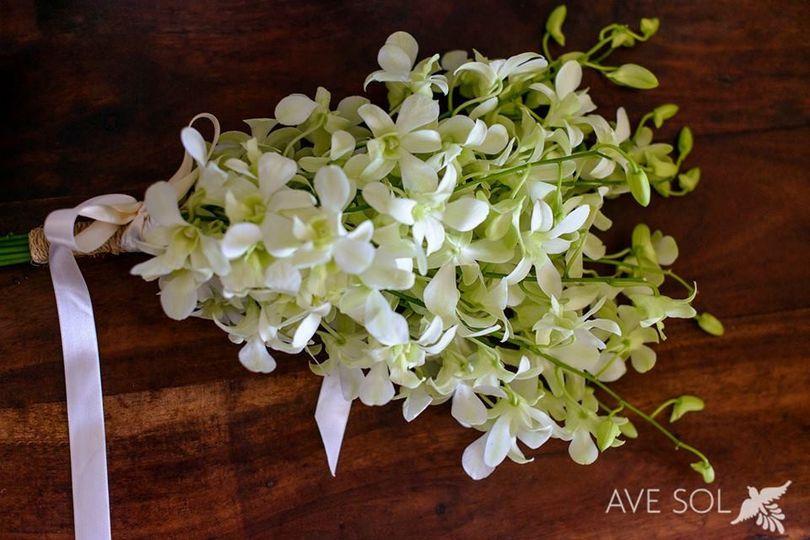 punta de mita orchids