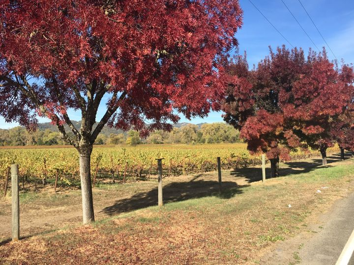 Bottom of our hill vineyards