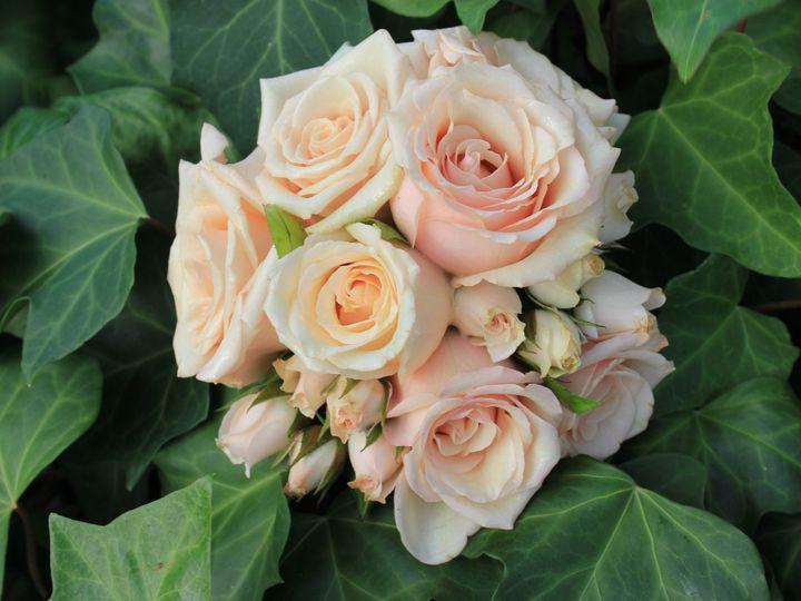 Tmx 1454253259772 Img4541 Staten Island wedding florist