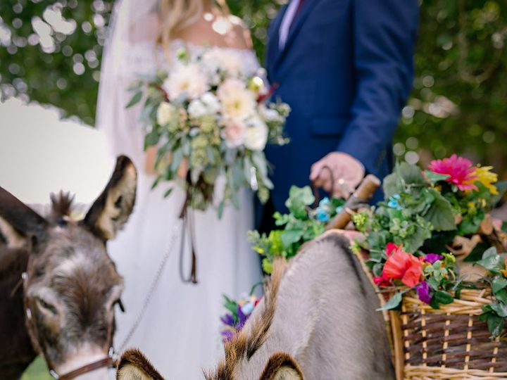 Tmx Miniature Donkey Beer Burros Old Glory Ranch Wimberley 51 166863 160936798365507 Wimberley, TX wedding venue