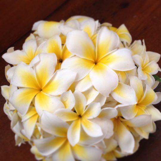 Frangipani bouquet