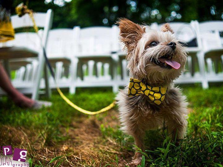 Tmx Dog In Weding Bow Tie 51 110073 Wayne, PA wedding venue